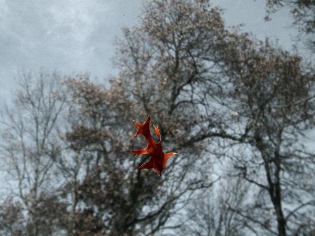 falling-leaf-1466188