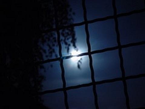 moonlight-1459791